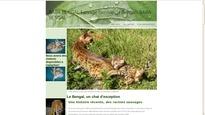chatons bengal a vendre